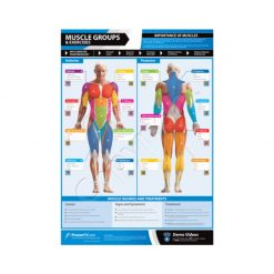 Poster Fit Muscle Groups and Exercises Poster